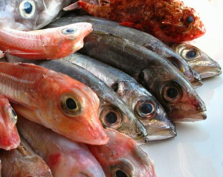 Itt we are tonysopran0 forums for Fish sniffer forum