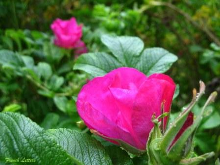 Sunrise garden 046