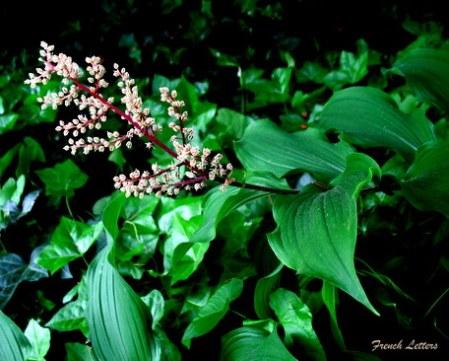 Sunrise garden 051